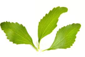 stevia-édulcorant naturel-100Sucres